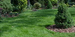 VanDuzen Lawn Care, in Niagara, Ontario